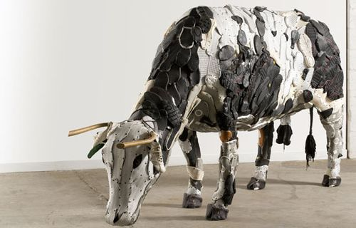 Uribe Cow