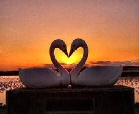 Swan_valentine_sm