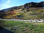 Swiss vinyards