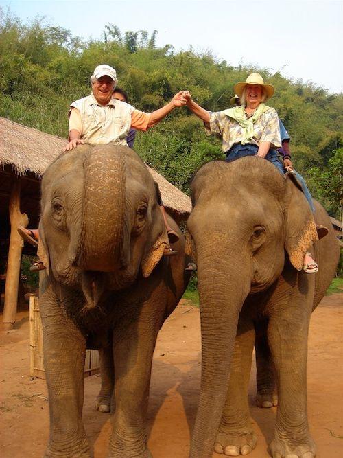 Thailand elephant E&ME