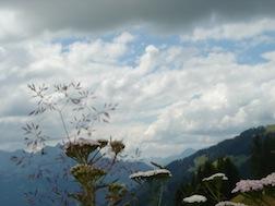 Swizz alps flowers