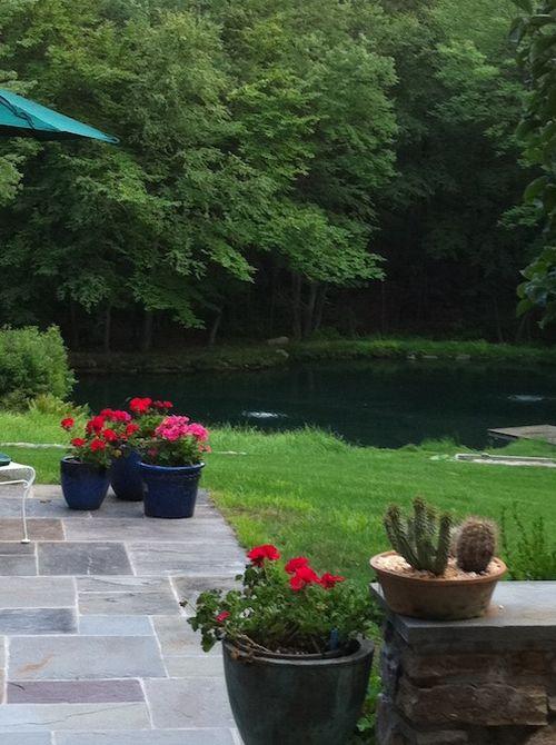 Geraniums and pond