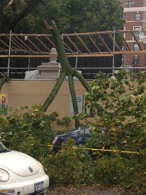 Fallen tree coope hewitt