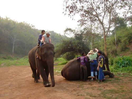 Erica mounting Elephant