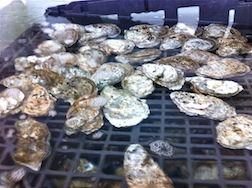 OYSTERS ON THE HALF SHELL 3.5