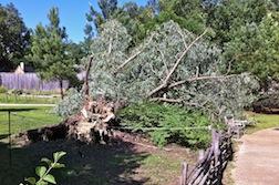 STORM TREE 3.5