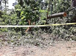 STORM TREE DOWN3.5