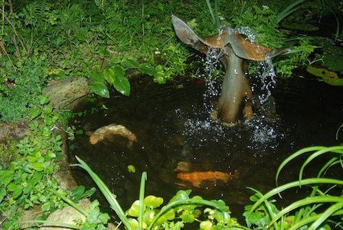 Koy Pond 7