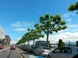 Geneva polarded trees