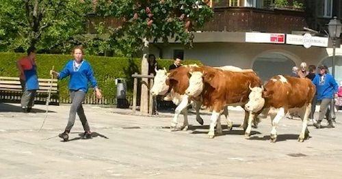 Cow parade 1 7