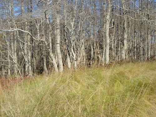 TREES WHITE AGAINST GRASS 7