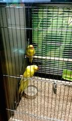 Love birds 3.5