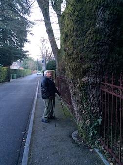 Walk 2 tree 3'5