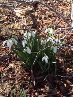 NANTKT SNOW DROPS 3.5