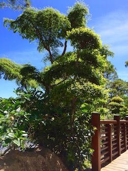 TREES PINE 3.5