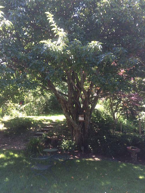 MY TREE 8