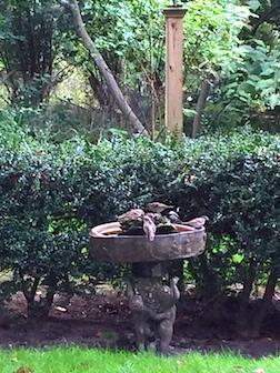 Bird bath w:birds 3.5