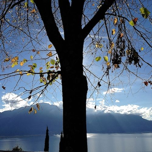 LAKE W:TREE 7