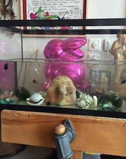 Buny Aquarium 3.5
