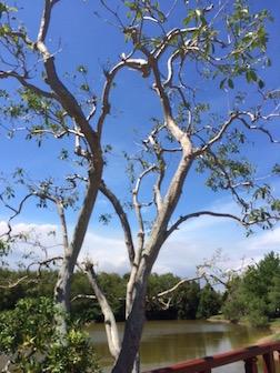 TREE ON LKAE 3.5