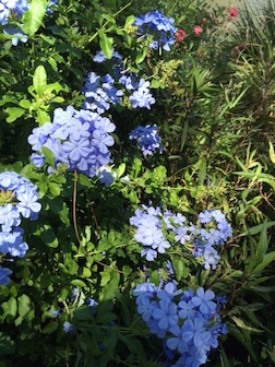 FLOWERS BLUE 3.5