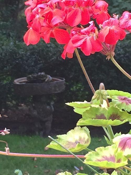 Flower & birdbath 7
