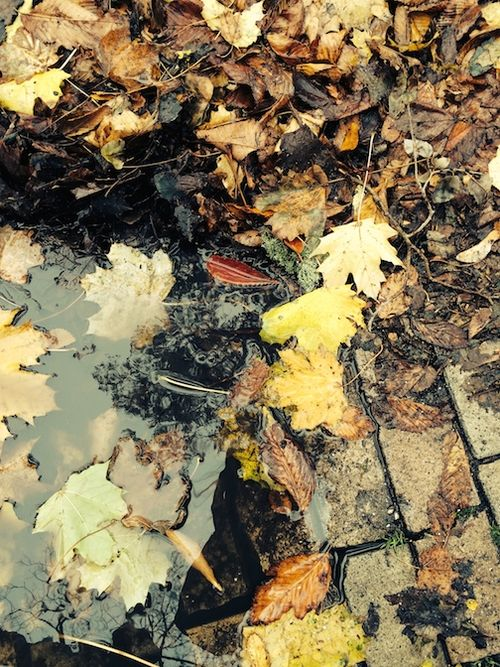 LEAVES IN PUDDLE 2 7