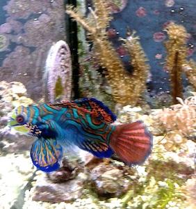 Angle fish 2- 3.5