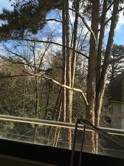 Window sunin trees 3.5
