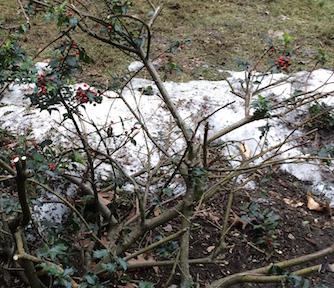 Snow2 3.5
