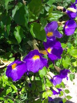 FLOWER PURPLE 3.5
