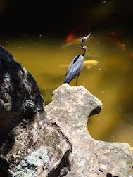 HEON W:FISH 7